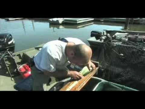 Busse Lake FPDCC Survey