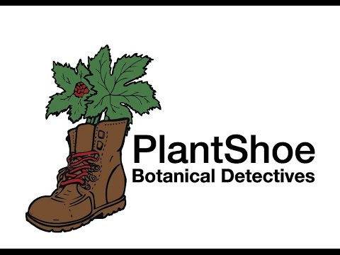 PlantShoe How to