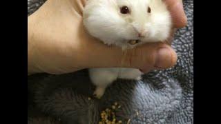 Hamster Loves Bird Seed || ViralHog