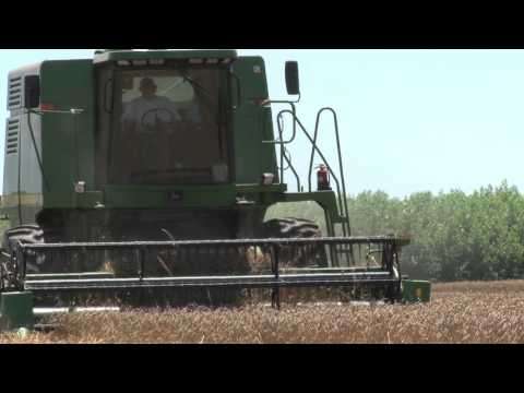 MSU AgBioResearch: Developing Second-Generation Biofuels