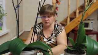 Как приручить Строптивую Орхидею?
