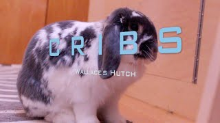 Cribs Presents: Wallace