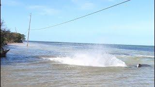Wade Fishing Shallow Attack!