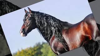 Андалузские Лошади. #ОбожаюЛошадей