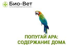 Попугай Ара: Содержание В Домашних Условиях & Характер И Поведение Попугая Ара. Ветклиника Био-Ве