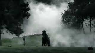 Клип для любителей лошадей