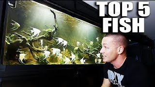 TOP 5 FISH IN MY AQUARIUMS