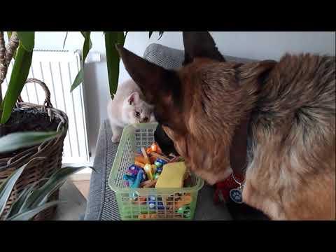 Как подружить собаку с кошкой