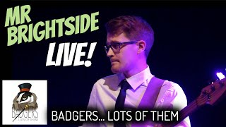 Mr Brightside [The Killers] // Badgers... Lots Of Them // LIVE COVER