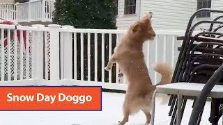 Dog Tries To Catch Snowfall