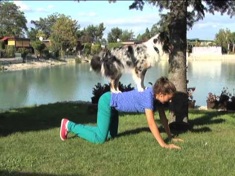 Dog Tricks by Enya Australian Shepherd