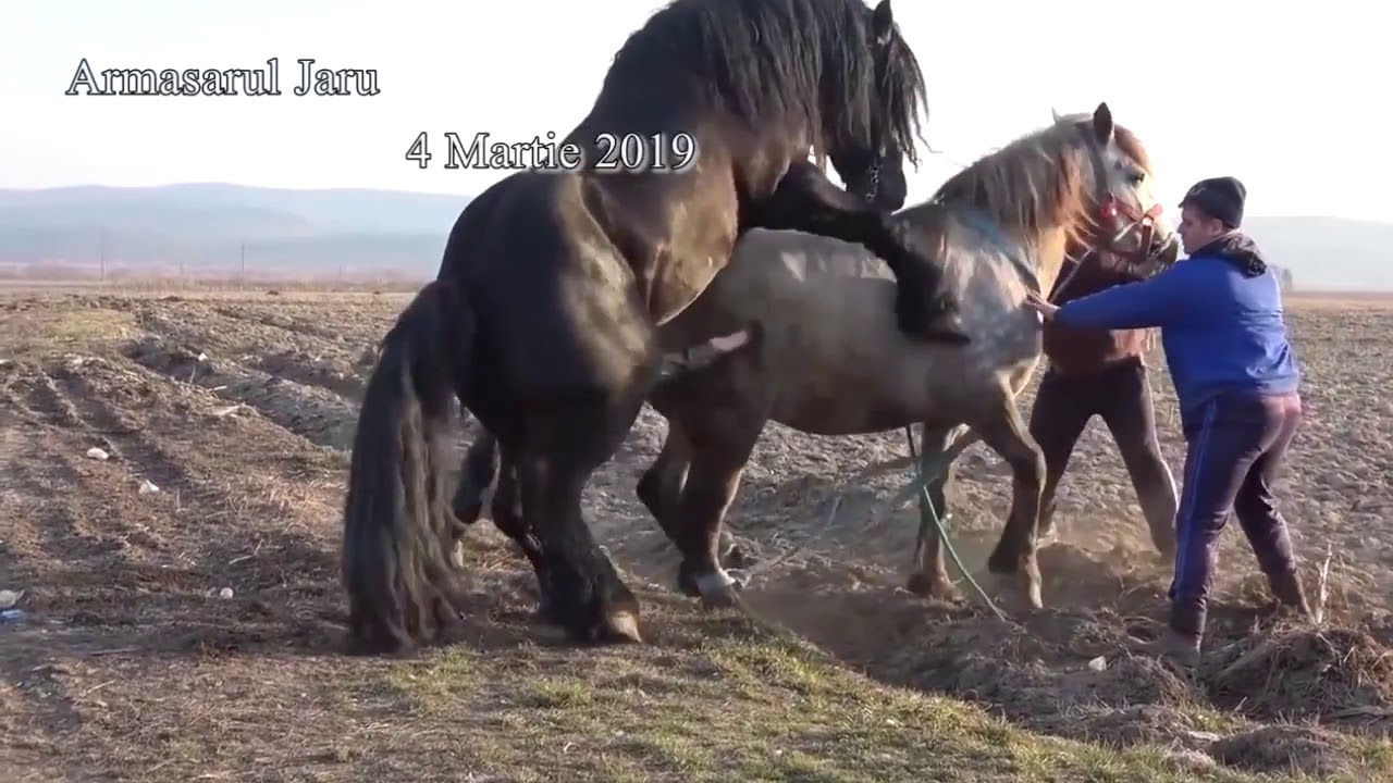 Download Hot! Big Horse HARD Mating Compilation 2019 - Horse breeding - Animals Mating