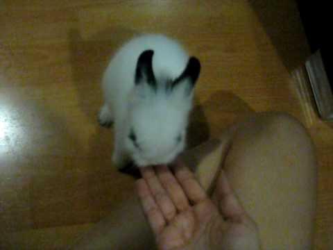 วิธีสอนกระต่าย...น้องmelo