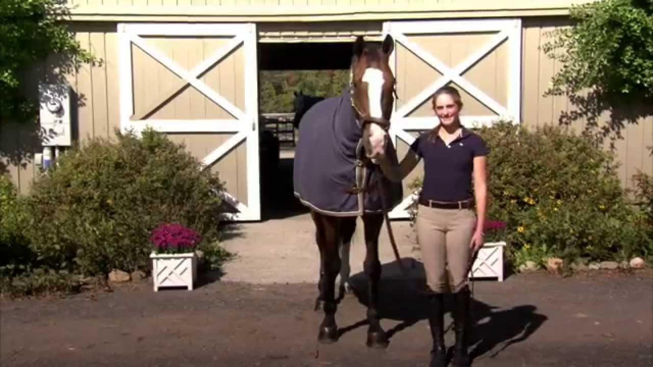 Blankets for Horses: FAQs