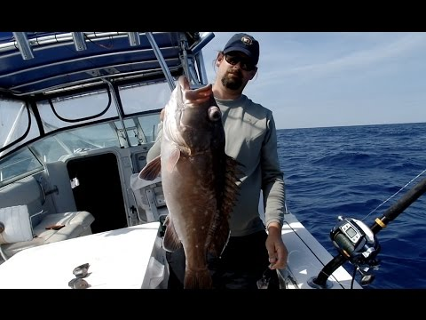 DEEP DROPPING FLORIDA: SNOWY GROUPER IN 500+ FEET