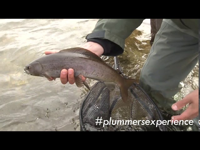 Great Bear Lake Highlights | #plummersexperience
