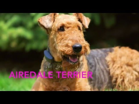 DOG BREEDS (part 1)