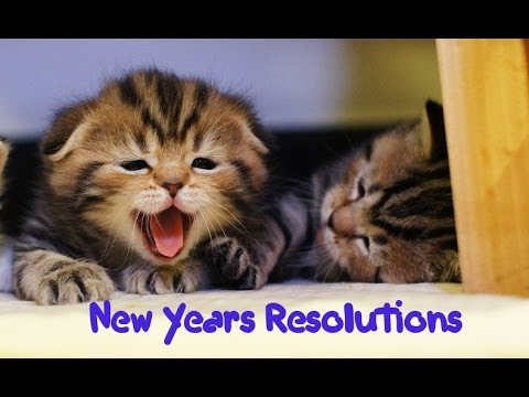 New Year's Resolutions of my Funny Cats and Cute Kittens