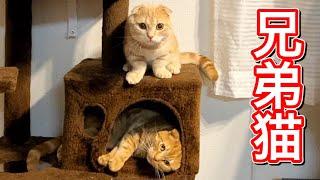 寝る前の兄猫と短足猫の様子がこちら