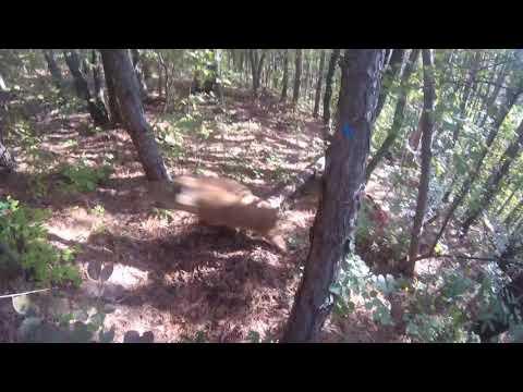 Wild Boar Hunting Bulgaria Part 1
