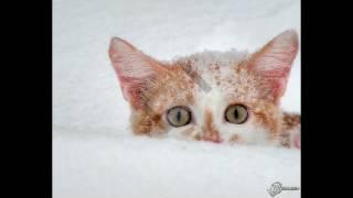 песня тёплые коты