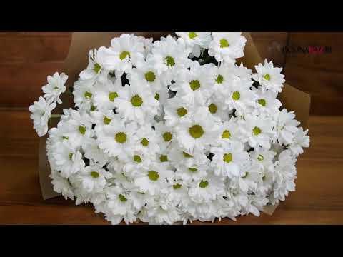 Купить букет ромашек - доставка цветов в Минске
