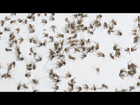 Zika: New Brain Cancer Cure?