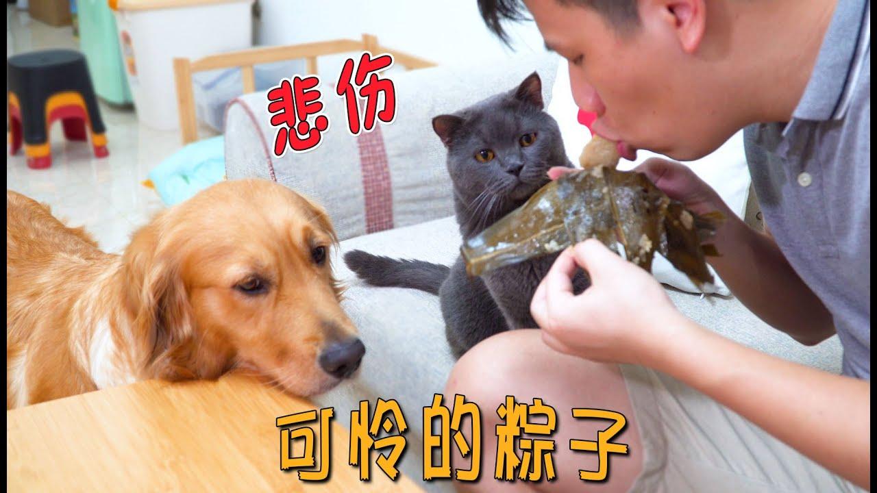 """端午节到了,猫咪""""粽子""""瑟瑟发抖:别吃我!"""