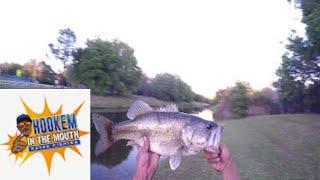 Pond fishing Multi species P.B. BASS FLORIDA FISHING  FOR BIG BASS