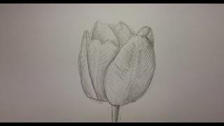 Как нарисовать тюльпан.(В этом уроке вы увидите как нарисовать тюльпан в карандаше и достаточно красиво. Нарисовать такой цветок..., 2015-02-20T18:10:10.000Z)