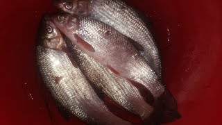 Зимняя рыбалка на Днестре Январь