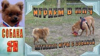 Активные игры с собаками. Шарпей и Шпиц. Собаки. Playing ball with the dogs.