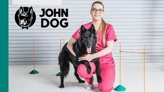 Trening psa okiem weterynarza - ZDROWIE PSA - John Dog