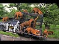SAFARI WORLD  THAILAND | Bangkok Dolphin Show | Travel vlog #19