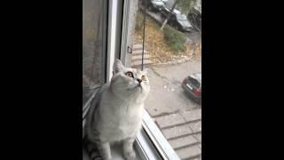 Кот сломался (Оригинал) / Focused cat is focused