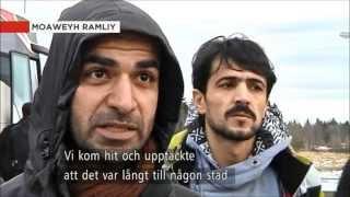 Grytans Asylboende i Östersund  Syrier