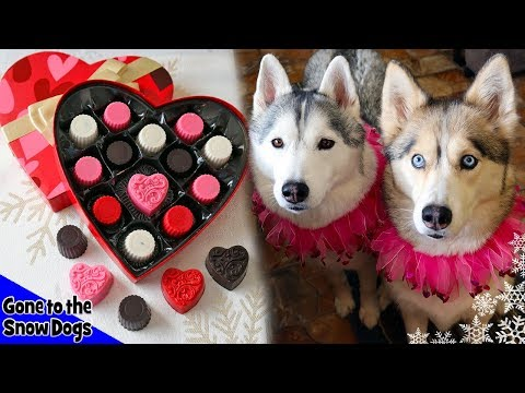Valentine's Day Chocolates For Dogs | DIY Dog Treats 113 | Carob Dog Treats