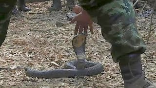 U.S. Soldiers Participate in Jungle Survival Training - Thailand Snake Handlers
