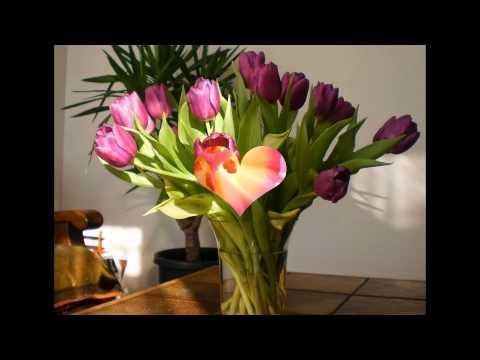 Что добавить в воду, чтобы тюльпаны дольше стояли