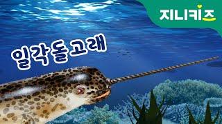바다의 유니콘! 일각돌고래 (narwhal)   어린이 자연관찰   지니키즈 인기 과학동화 Kids Science