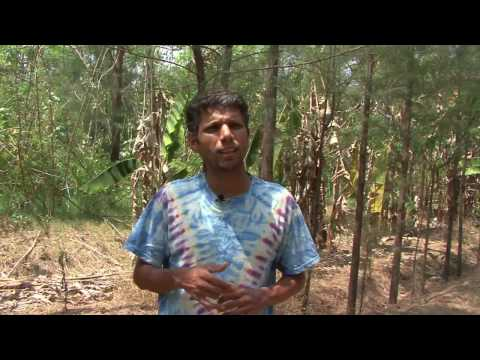 Ragunath Padmanabhan - Green Local
