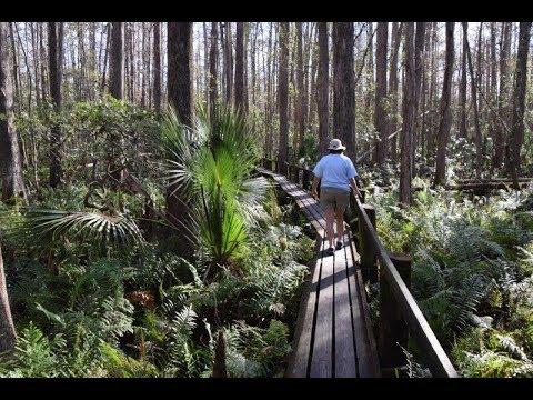 Highlands Hammock State Park - Sebring, FL