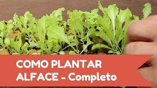 Como plantar ALFACE fácil - Inicio, meio e fim!!!