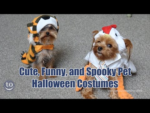 Funny and Spooky Pet Halloween Costumes & Funny and Spooky Pet Halloween Costumes - YouTube