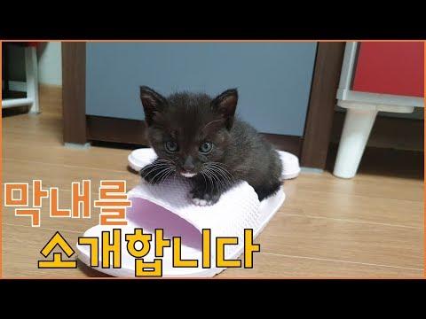 아기고양이 4남매 구조 영상 [9] - 아기고양이 입양보내요 (막내편)