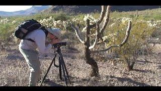 """© """"Некрофил"""" в горах Невады // """"Necrophiliac"""" in the mountains of Nevada"""