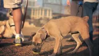 Pit Bull-terrier Mix Carries Her Ball | The Daily Puppy