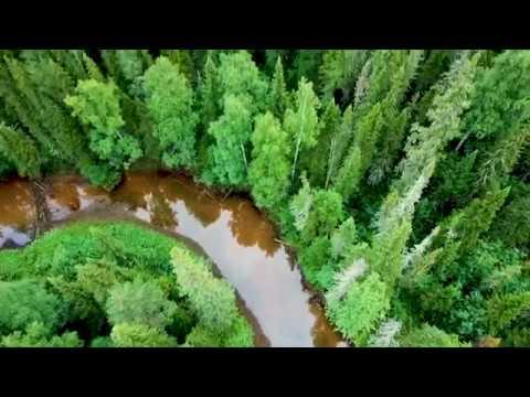 Река Лозьва.  Таймень и хариус.