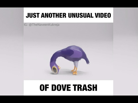 Trash Dove banging on an Indian rock song!