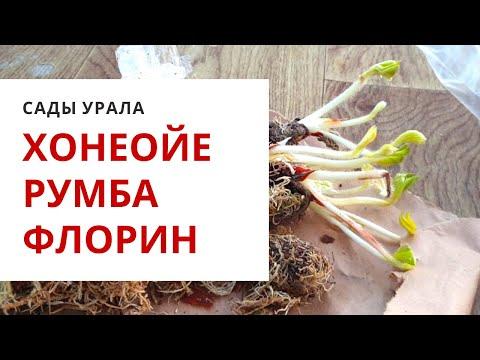 ОБЗОР ЛУЧШИХ Зарубежных Сортов Клубники!